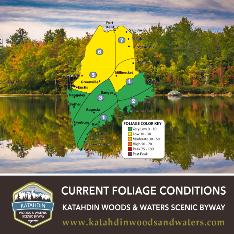Current-Foliage-Conditions